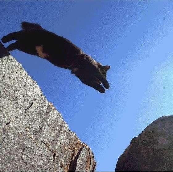 Кошка - путешественница-10 фото-