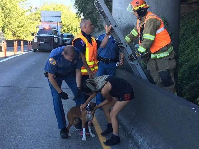 Бездомный, рискуя жизнью, спас жизнь собаке-5 фото-