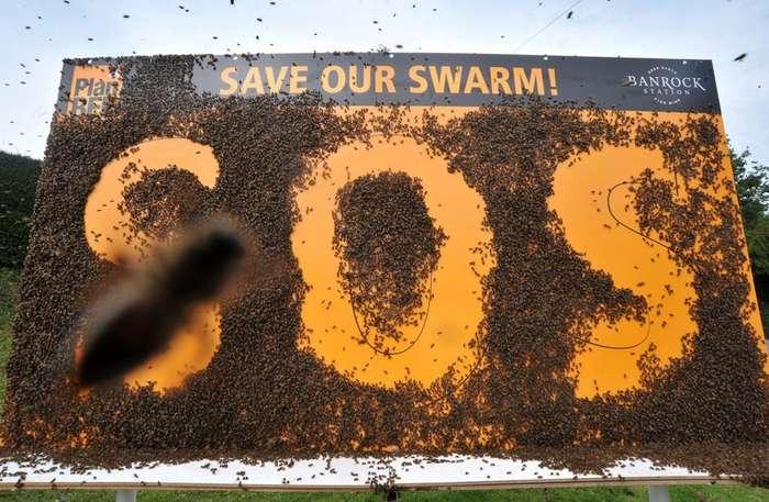 Вымирание медоносных пчёл - апокалипсис близок, как никогда раньше-7 фото-