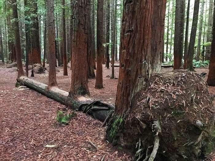 10 потрясающих деревьев с невероятной волей к жизни-10 фото-