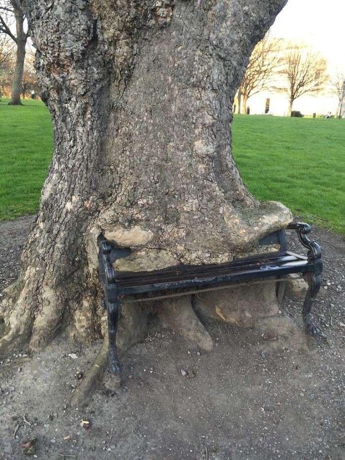 50 примеров деревьев с непреодолимым желанием жить-50 фото-