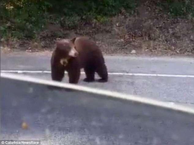 Любопытный медведь открыл дверь машины-5 фото-