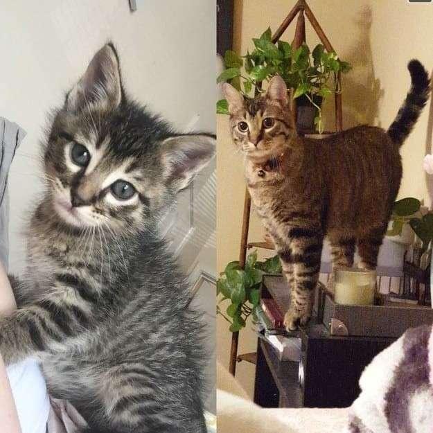 Когда я был котёнком: коты воссоздают свои детские фото-39 фото-