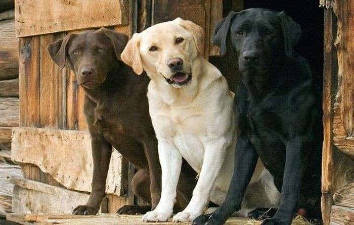 Интересные фактов о собаках-1 фото-