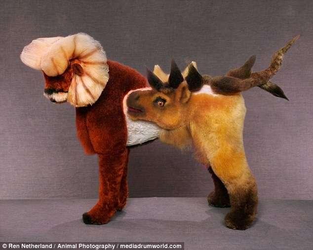 По прихоти хозяев: причудливые трансформации собак-15 фото-