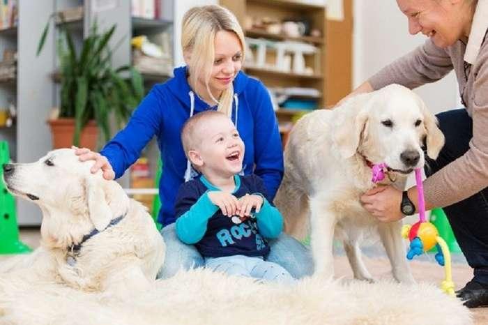 Животные, которые могут нас спасти: как собаки и кошки лечат болезни-9 фото + 2 видео-