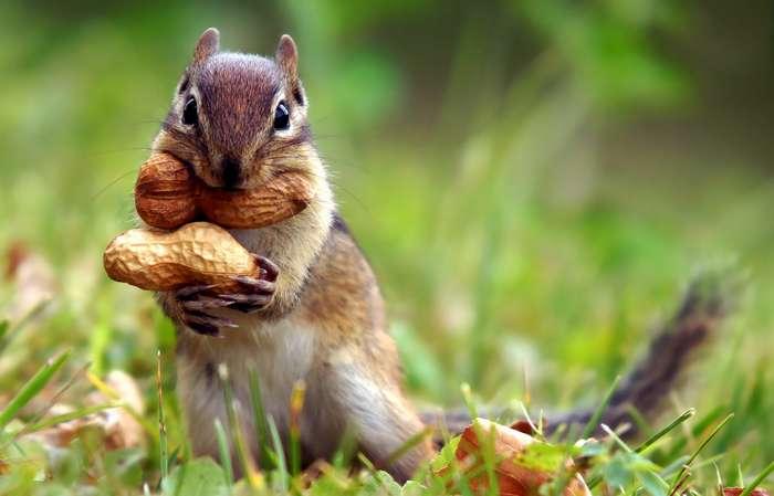 30 интересных фактов о животных-1 фото-
