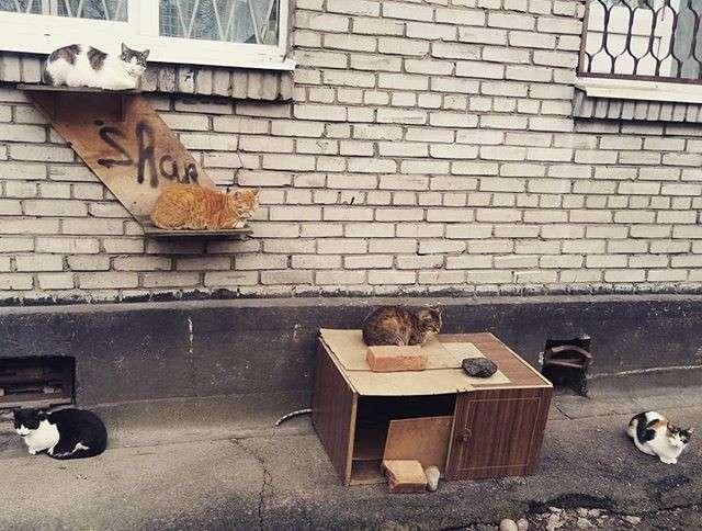 Как вы считаете, это настоящая забота о кошках или вред им?-19 фото-
