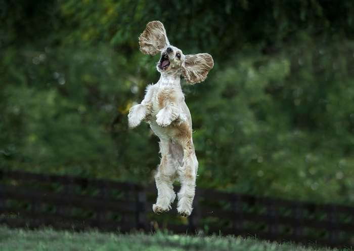 Победители фотоконкурса Comedy Pet Photography Awards 2017-15 фото-