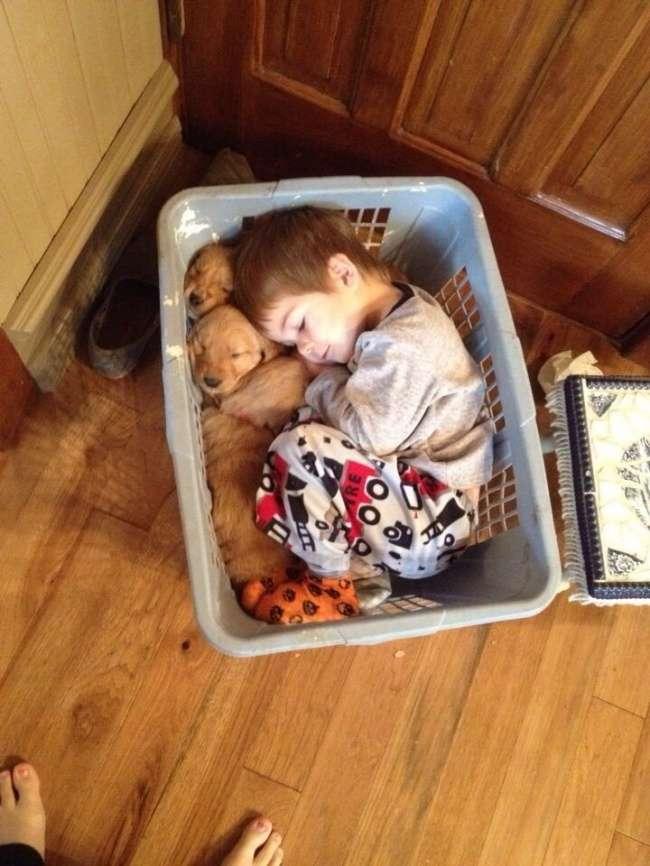 30убедительных причин завести собаку