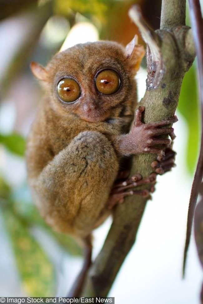 11невероятных животных, окоторых мыпочему-то никогда неслышали