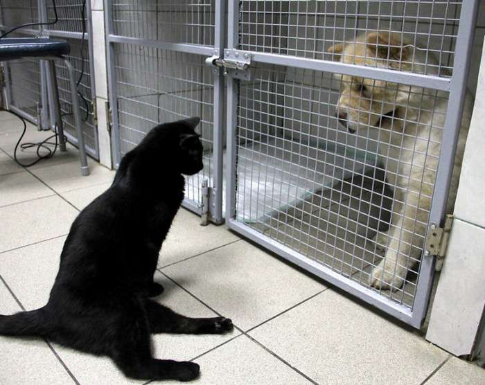 Кот не может ходить, но помогает другим больным животным-11 фото-