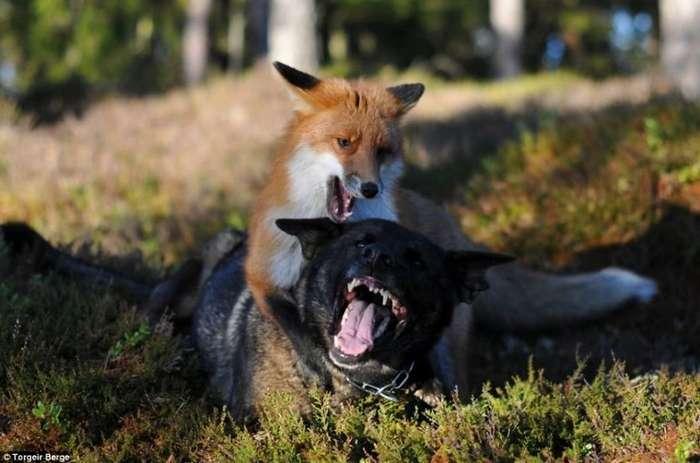 Странная и трогательная дружба-10 фото-