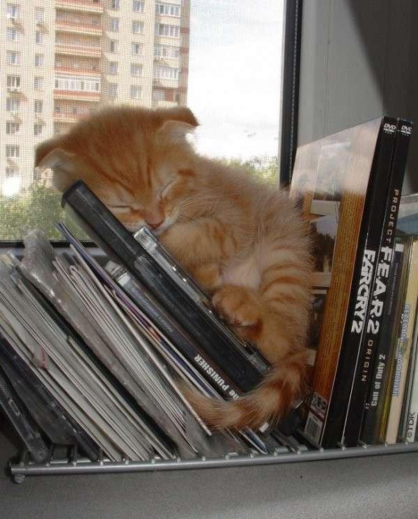 Очаровательные сони из семейства кошачьих-31 фото-