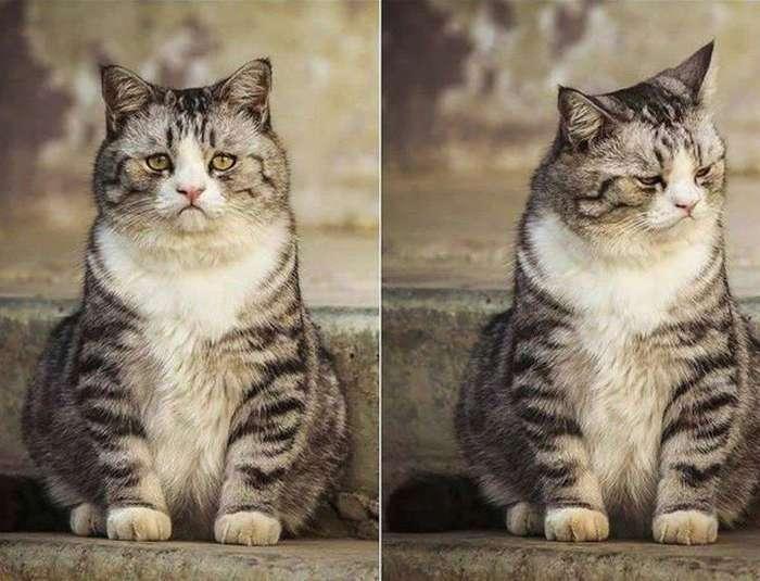 Прикольные животные, которые поднимут вам настроение-14 фото-