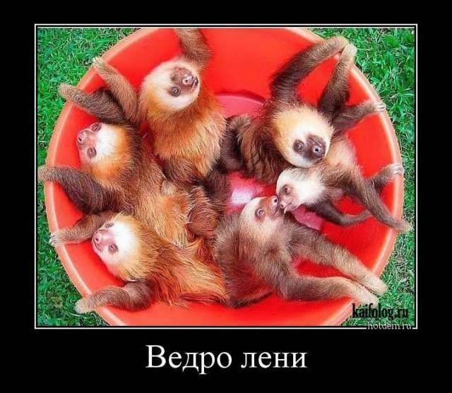 Демотиваторы с животными (45 штук)