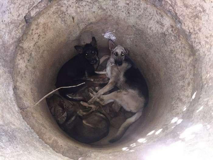 В севастополе спасли трех истощенных собак, которых кто-то бросил в колодец-7 фото-