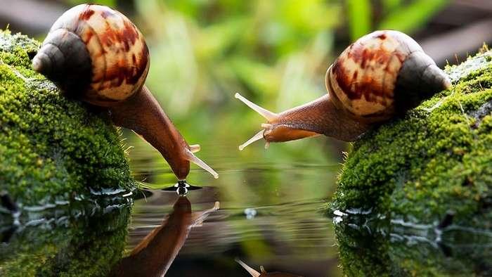 23 интересных факта о животных, которые вас удивят-3 фото + 20 гиф-