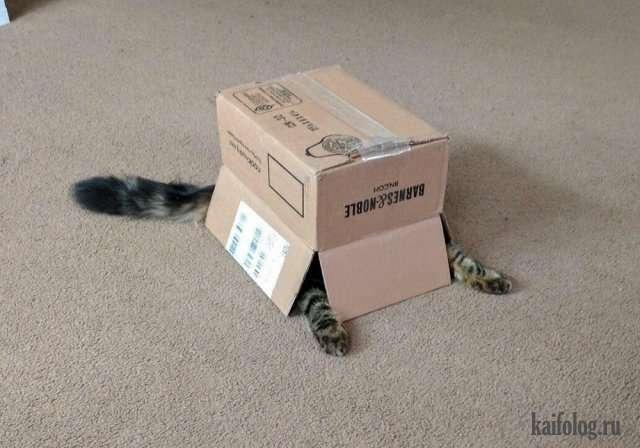 Очень прикольные коты (50 фото)