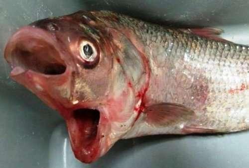 Топ-25: невероятные примеры реальных мутаций у животных