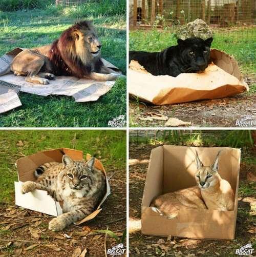 Кошки, которым комфортно везде (32 фото)