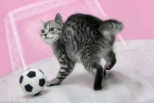 Прелестные котята, которые вызовут вашу улыбку (14 фото)