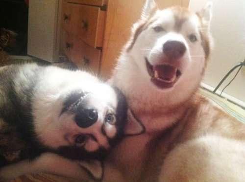 Чудесные пёсики, которые подарят вам улыбку (22 фото)