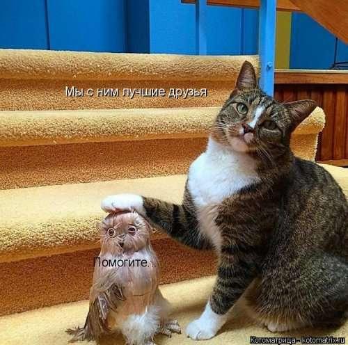 Свежая котоматрица для настроения (26 фото)