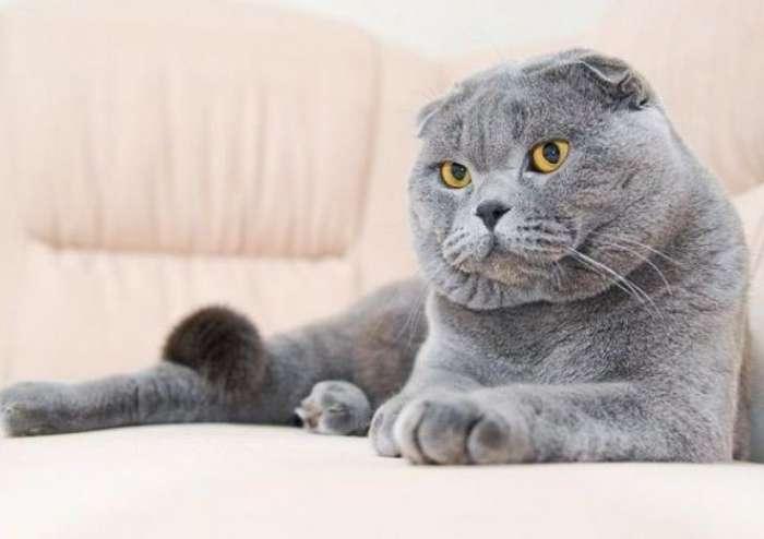 Ломаем голову больше недели, мог ли кот продумать такой изощренный план или это получилось случайно-1 фото-