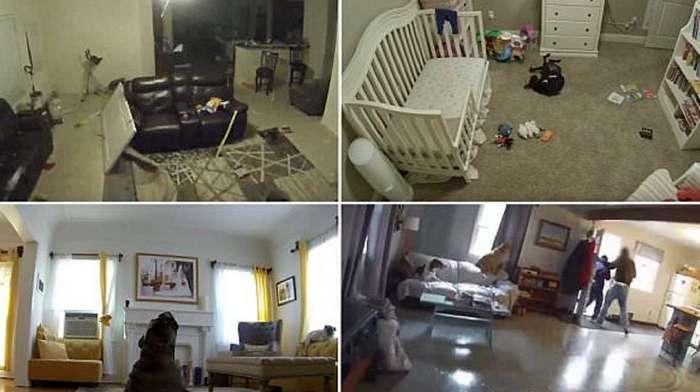Что происходит дома, когда нас нет?-11 фото + 9 видео-