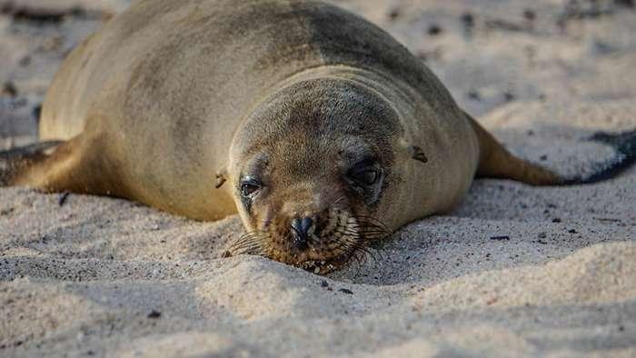 Очаровательные детеныши морских львов-15 фото-