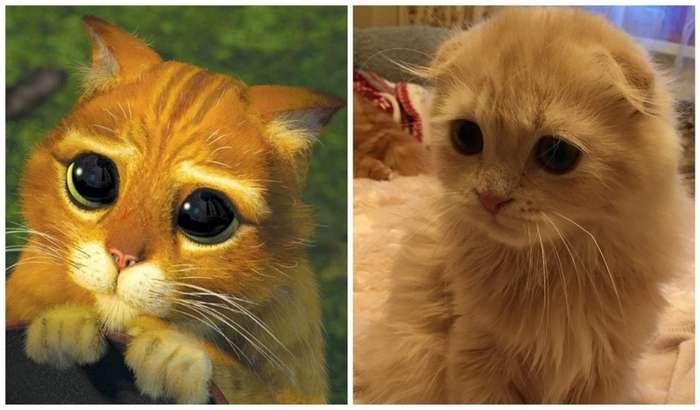 Кошки, которые -строят глазки- своим хозяевам-21 фото-