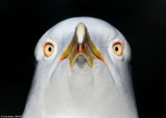 Объявлен победитель фотоконкурса Bird Photographer Of The Year-13 фото-