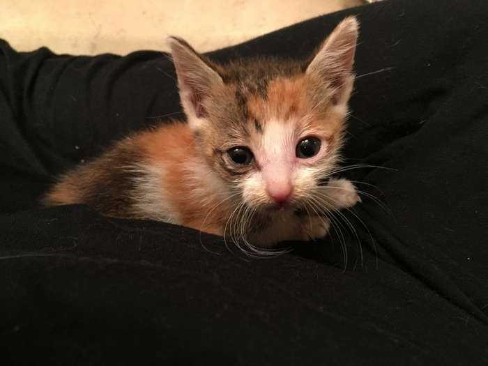 Ветеринар давал лишь 50% на то, что котенок переживет выходные-13 фото-