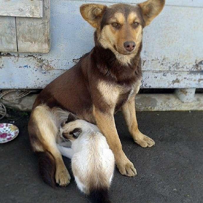 В Липецке собака вскармливает кошачью семью-3 фото-