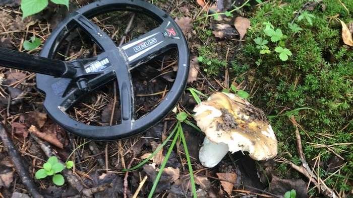 Загадочная воронка в лесу и редкая находка!-14 фото + 1 видео-