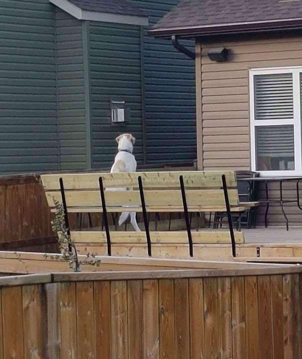 Когда с соседями - не соскучишься: 35 фото-историй-36 фото-