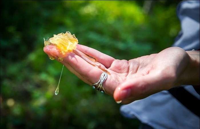 Как добывают мёд методом Винни-Пуха-18 фото-