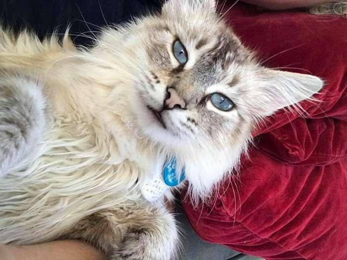 Он почувствовал её боль… бездомный кот утешил женщину, которая потеряла питомца-6 фото-