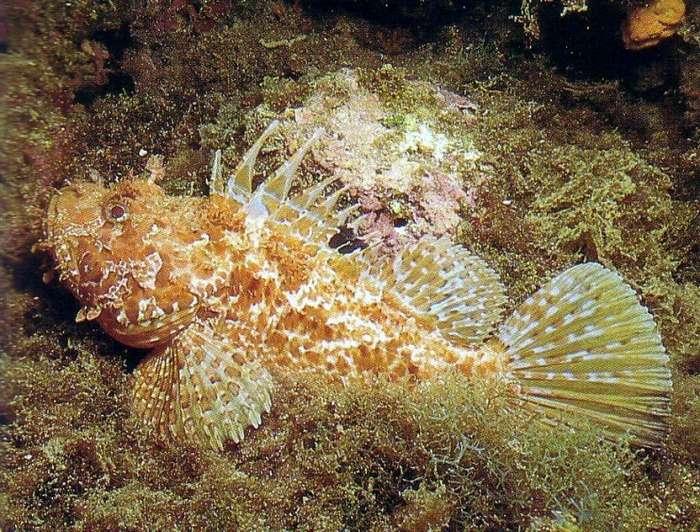 Подводные монстры, название которых четко отображает их суть-22 фото-