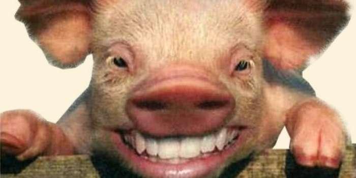 Трансплантация человеку внутренних органов свиней: преодолен последний барьер-12 фото-