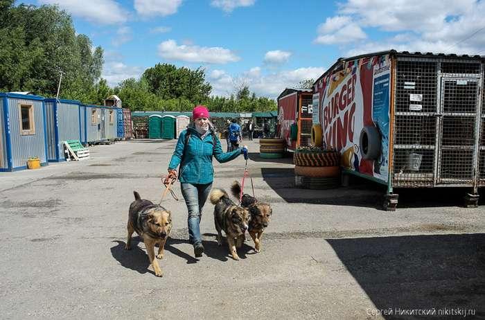 Кошки и собаки ждут своих хозяев-35 фото-
