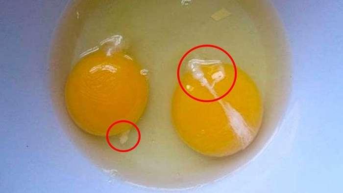 Если вы собираетесь съесть яйцо с такими белесыми следами на желтке - вы должны узнать правду.Жесть!-2 фото-