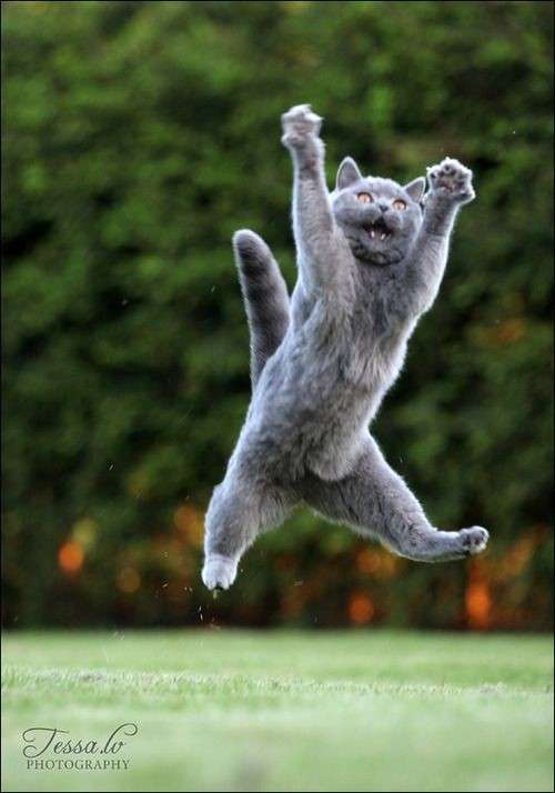 Уличные коты осваивают мастерство кунг-фу-20 фото-