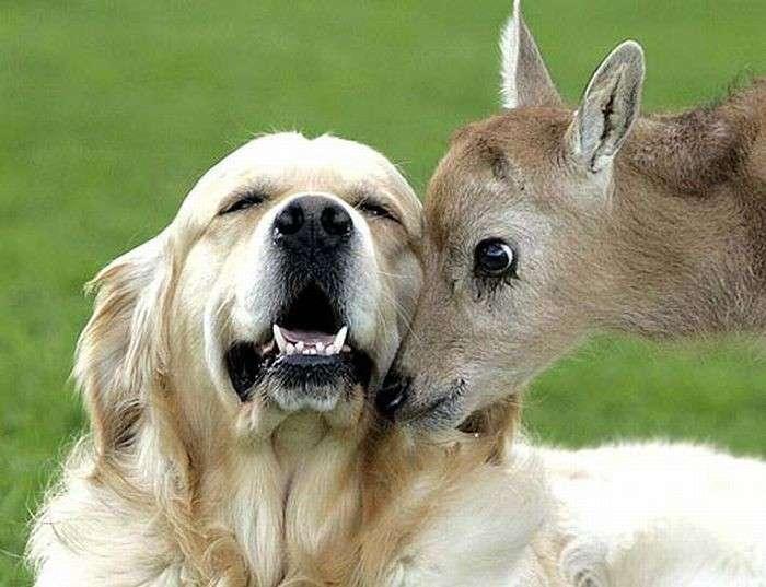 Эти забавные животные-29 фото-