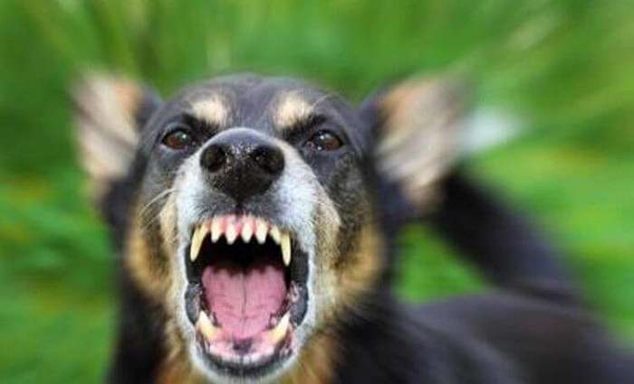 Спецназ советует: как действовать при нападении собаки-5 фото-