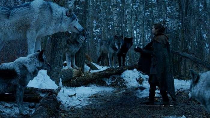 Лютоволки Старков - удивительная связь между персонажами и их питомцами-8 фото-