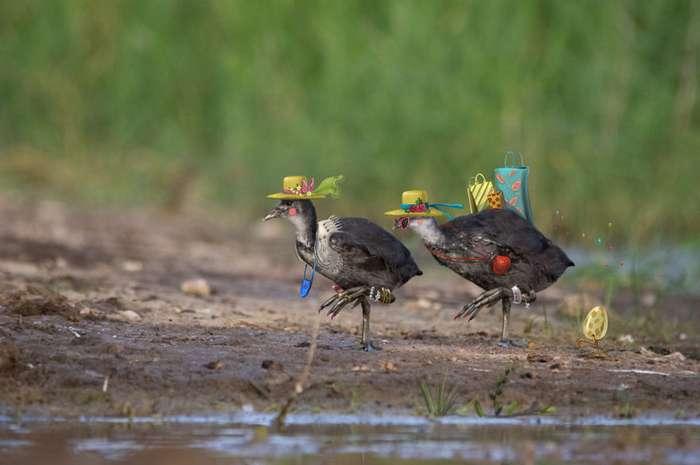 Проект фотографа и иллюстратора, рассказывающий истории диких животных-21 фото-
