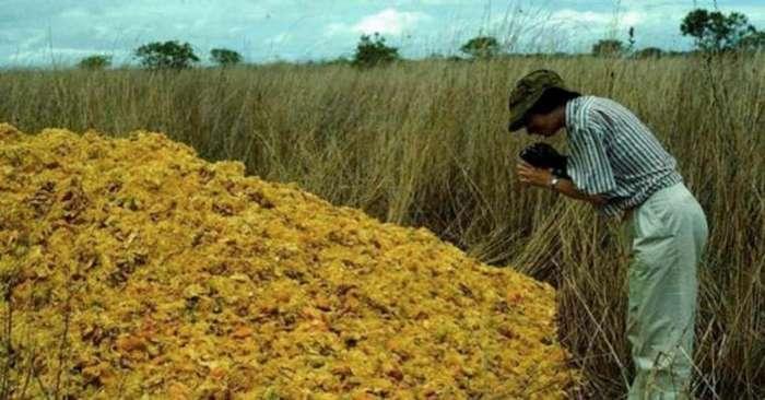 Производители газировки выбрасывали корки апельсина. Вот как выглядит 16 лет спустя то самое место!-4 фото-