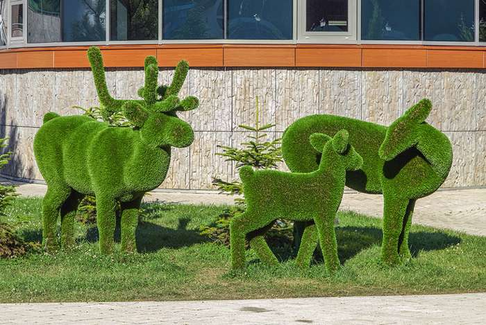 Как сделать газонные фигуры из травы